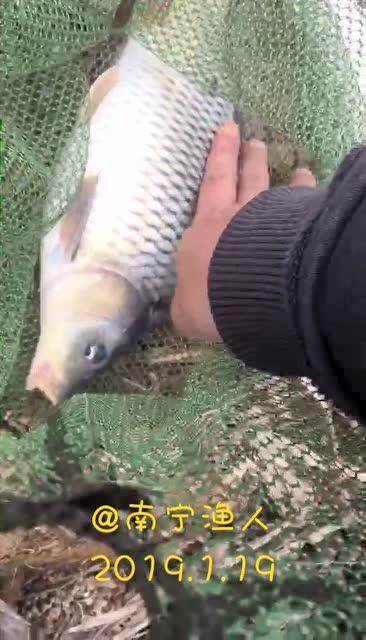 软竿细线小钩,想不到能钓上一条大鱼