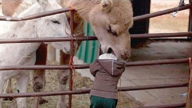 有趣的动物时刻