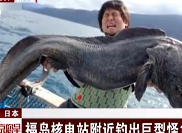 福岛核电站废水排入大海,短短一年变异鱼大的足以吃人