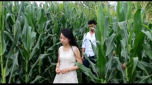 玉米地里最现实的农村姑娘,火了 - 腾讯视频
