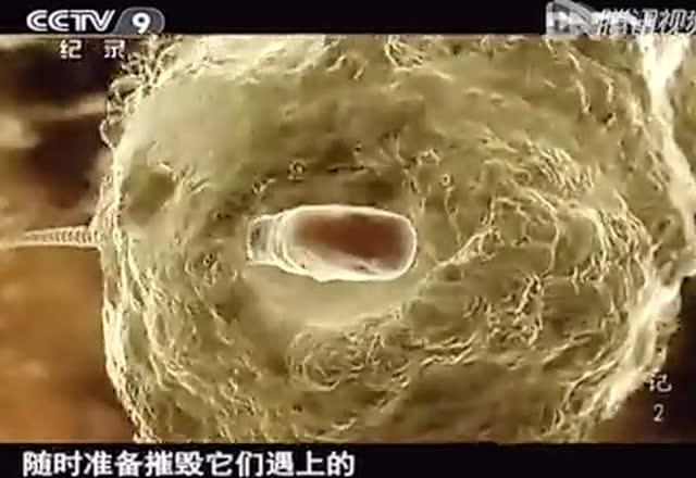 精子的生存之战截图