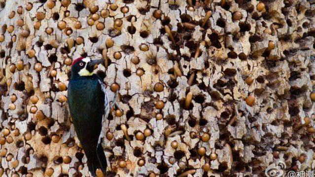 啄木鸟经典出品剧情片