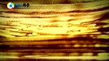 沙画中的佛学:《论道篇》之六 入大涅槃