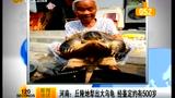 河南平顶山地里犁出大乌龟  鉴定约有500岁
