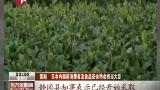 日本:著名绿茶产区发现放射污染