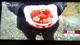 现场记者的草莓炸弹