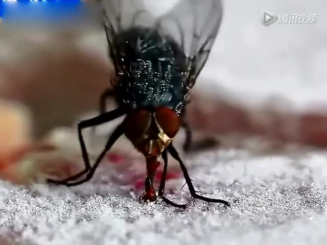 苍蝇舌头粘在冰上了截图