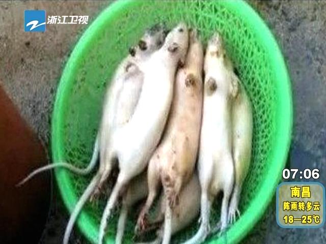 江苏一团伙用狐狸肉老鼠肉加明胶等冒充羊肉截图