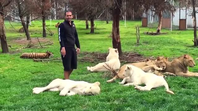 看天下:动物园管理员险遭花豹袭击 老虎来搭救