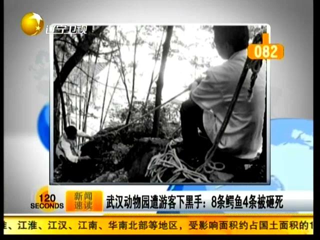 武汉动物园遭游客下黑手:8条鳄鱼4条被砸死截图