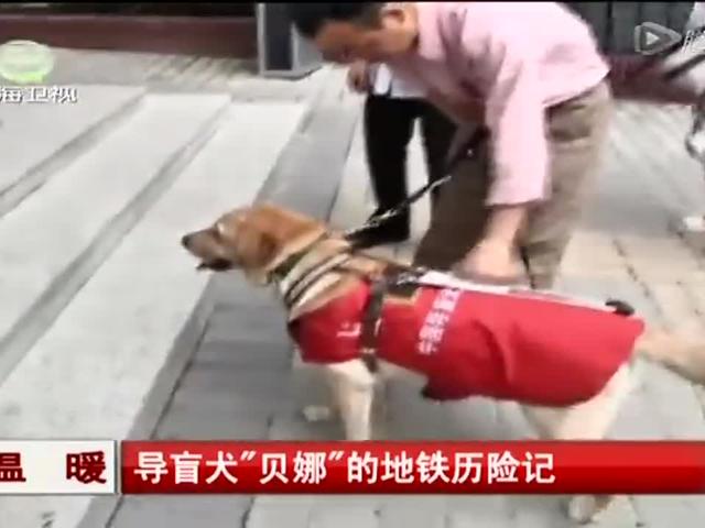 """导盲犬""""贝娜""""的地铁历险记截图"""