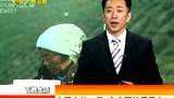 中国人的一天:古寺下的采茶女