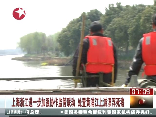 上海浙江加强协作监管联动 处置黄浦江上游漂浮死猪截图