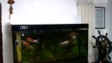 实拍甘肃6.6级地震西安市民拍摄鱼缸晃动