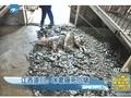 江西遂川:冰雹砸死小猪