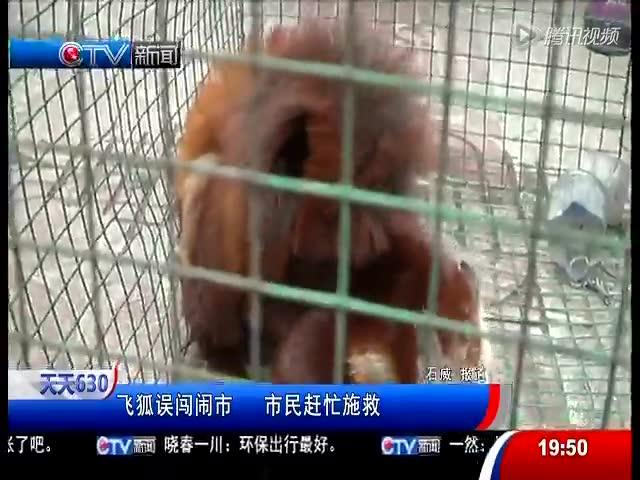 飞狐图片保护动物