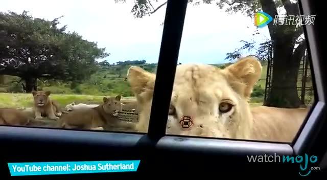 世界上最危险的十种动物