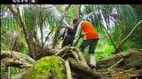 走遍中国:发现海南——雨林探奇