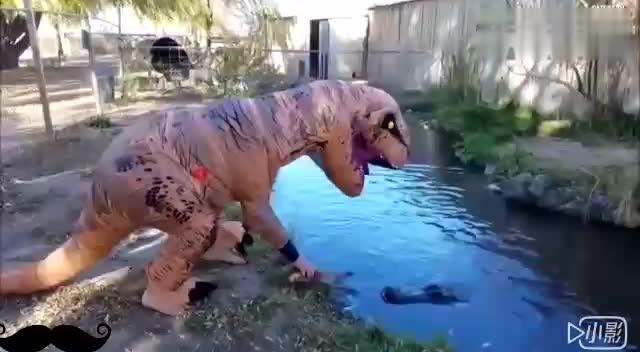 非洲大疯狂系列带孩子去动物园竟然看到惊人的一幕