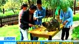 浣熊家族六代同堂 吃水果月饼迎中秋