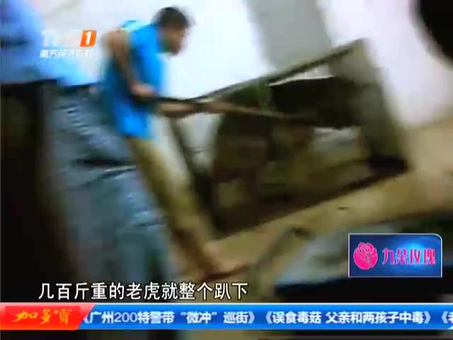 湛江团伙宰杀老虎现场视频曝光 老虎被活活电死截图