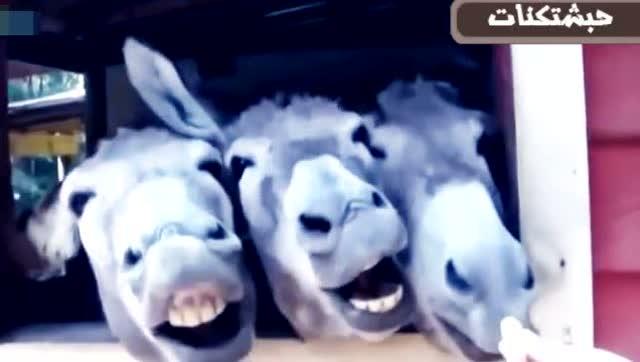 各种动物被惹毛后的反应,保护好大牙笑掉别怪我!