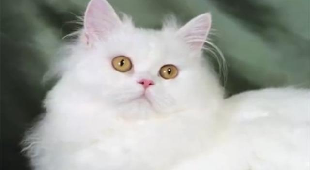 加菲猫)宝宝黑白弟弟