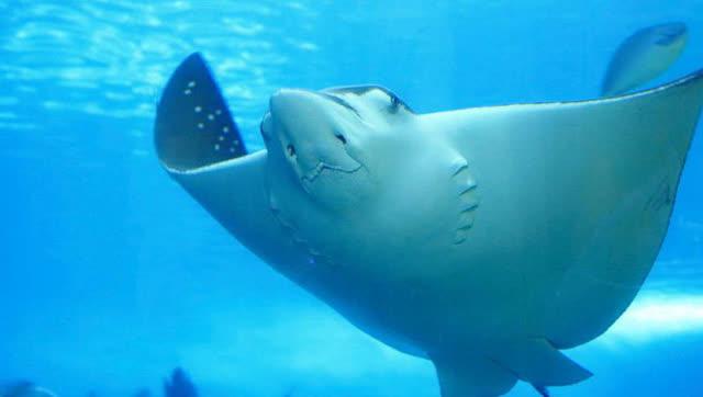 壁纸 动物 海洋动物 鲸鱼 桌面 640_362