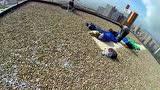 视频:恐高慎入!跑酷牛人第一视角探秘百米高塔