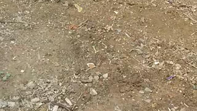 见所未见,民间牛人自制电蚯蚓机!