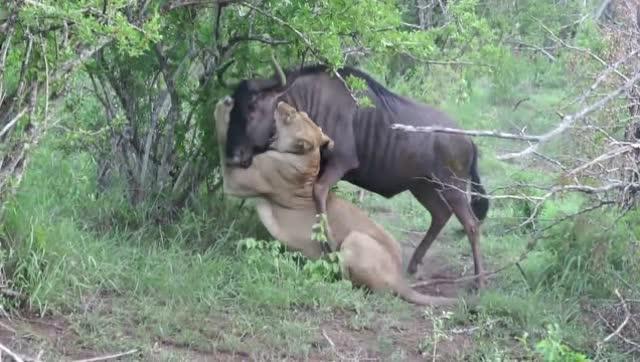 喉咙最长的动物