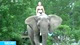 美大象与小狗成密友水中接球玩耍