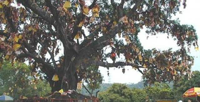 想不到的梦想成真的许愿树