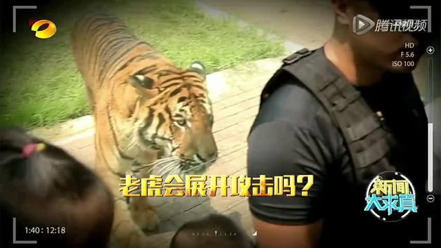 北京八达岭野生动物园老虎袭人事件