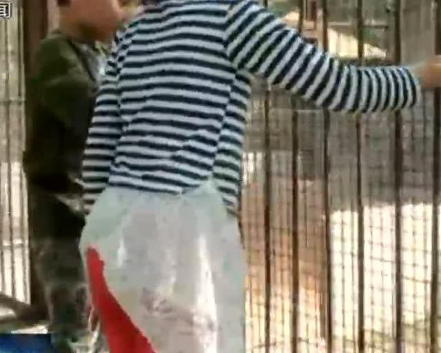北京动物园:游客不文明行为