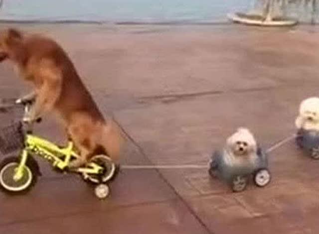 开车时撞到小动物?还有哪些最容易被忽视的交通法规!