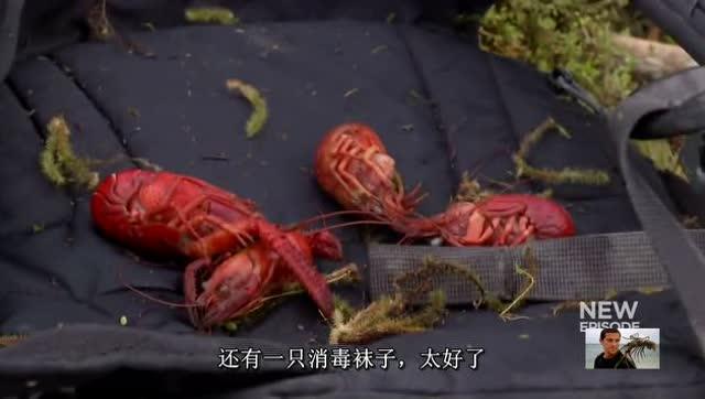 气球龙虾教程图解