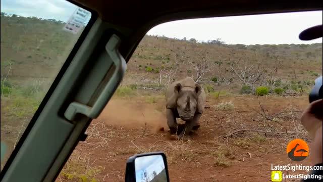 野生动物摄影师终于拍到这个让他铭记终生的惊魂一刻