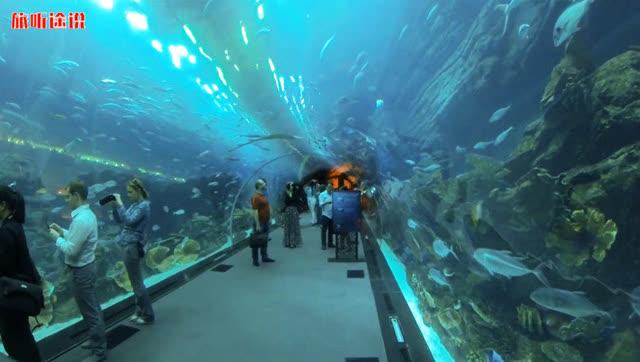 迪拜水族馆水下动物园