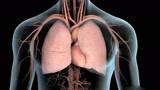 3D动画演示呼吸衰竭气管插管,简单生动一目了然