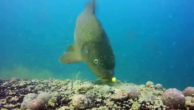 俄罗斯网友实验重现鲤鱼冬眠zhaocaishu图片