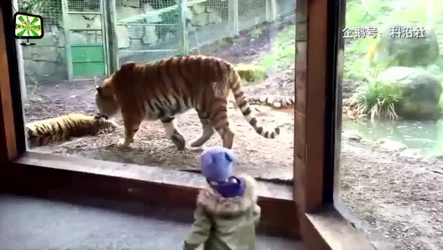 为什么不能在野生动物园内下车