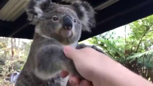 小伙与各种小动物握手,看看它们的反应是怎么样!
