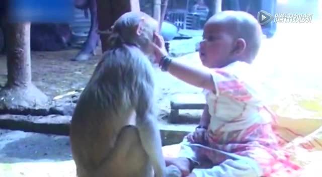 超温馨!印度母猴将女婴当自己宝宝照顾截图