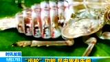 昆虫腿部结构类似齿轮 可协调弹跳
