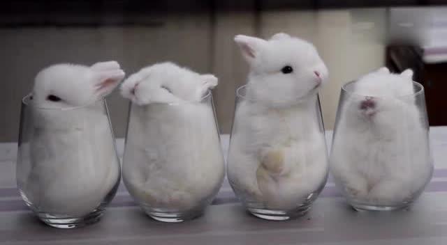 萌萌的小白兔偷偷的亲下前面兔兔