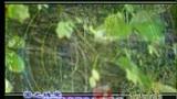 泰山顶上吹吹风(全讯网 www.321ww.com )