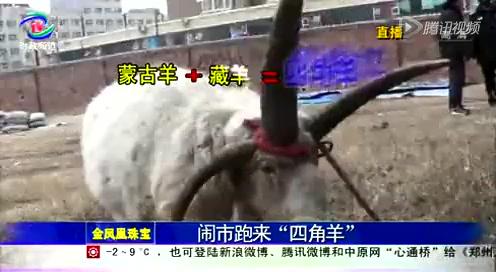 """相关:男子花万元买四角""""怪羊""""当宠物截图"""