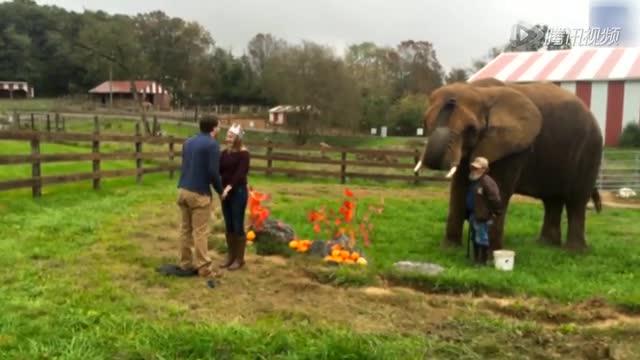 男子向女友浪漫求婚 大象帮忙拿戒指截图