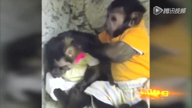 """""""暖男""""小猴安慰伤心雌猴 送给其爱的抱抱截图"""